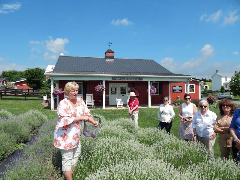 Members of Luray Garden Club touring White Oak Lavender Farm