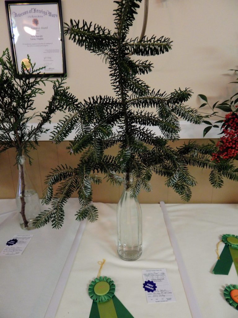 lesley-mack-arboreal-award